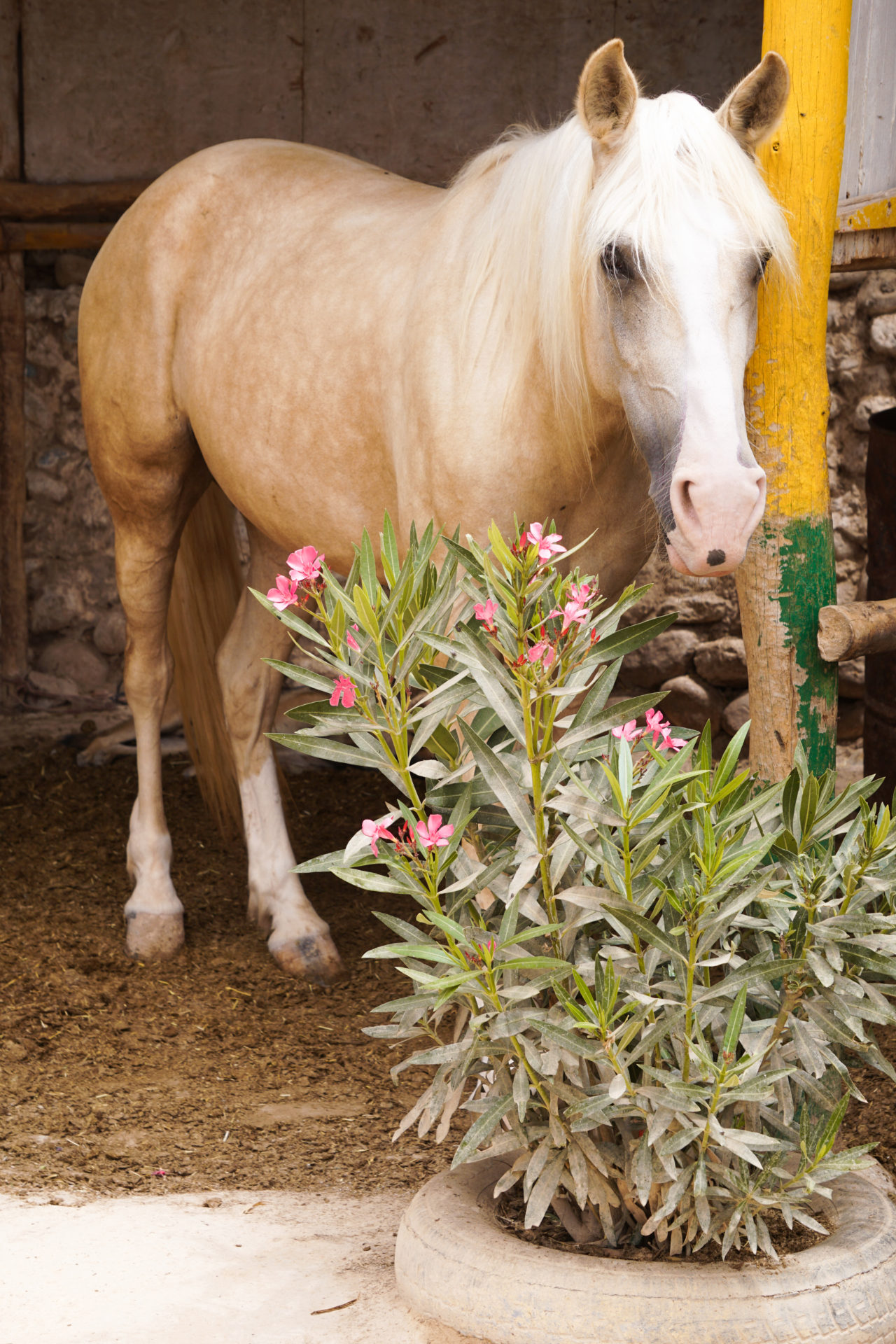horse riding morocco experience tips advice