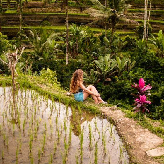Tegallalang rice terrasse Bali